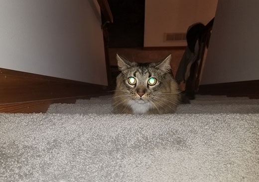 Cat walking up stairs with glowing green eyes.