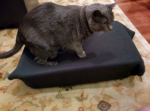 Gray cat walking on cat hammock made with black blanket.
