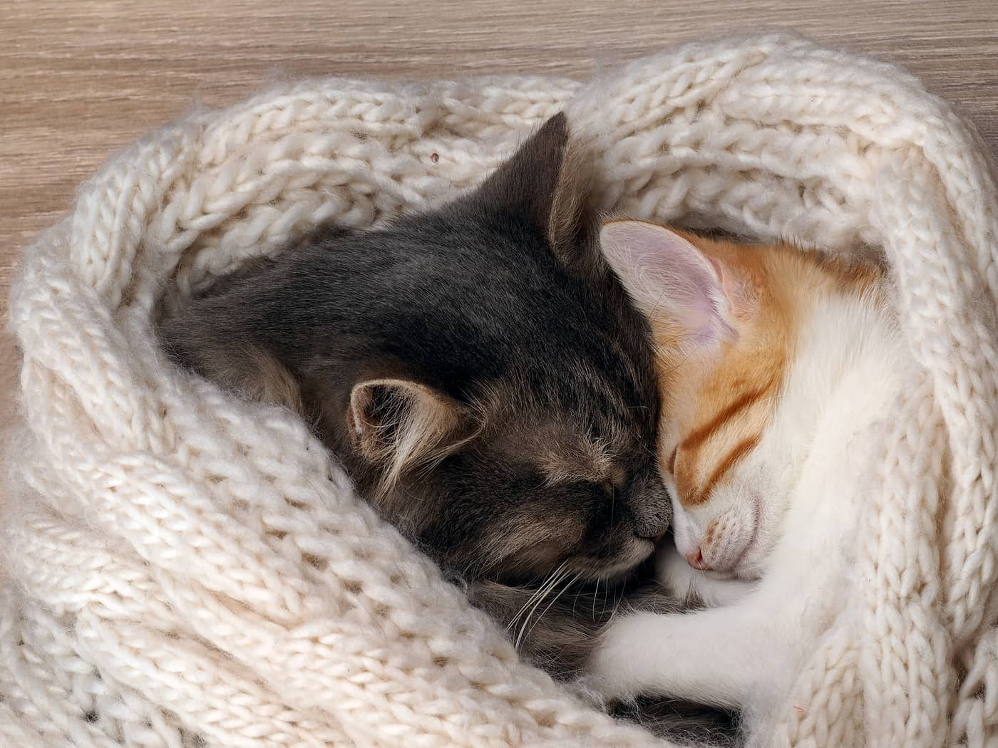 Two cats snuggling head to head in a blanket.