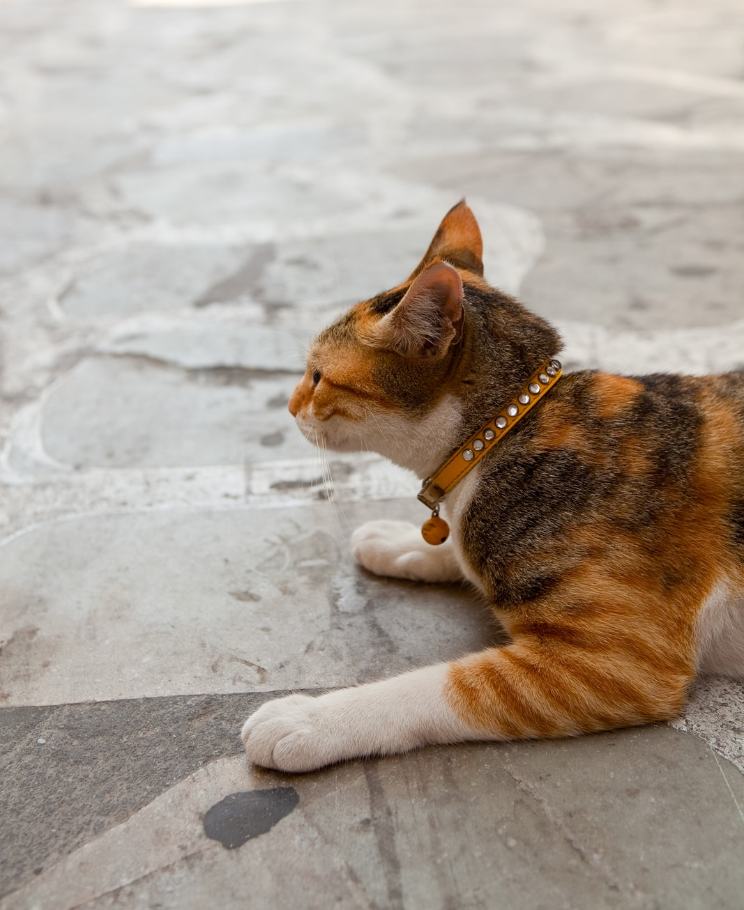 Orange cat lying on a rock-tiled floor