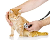 Cat with vet
