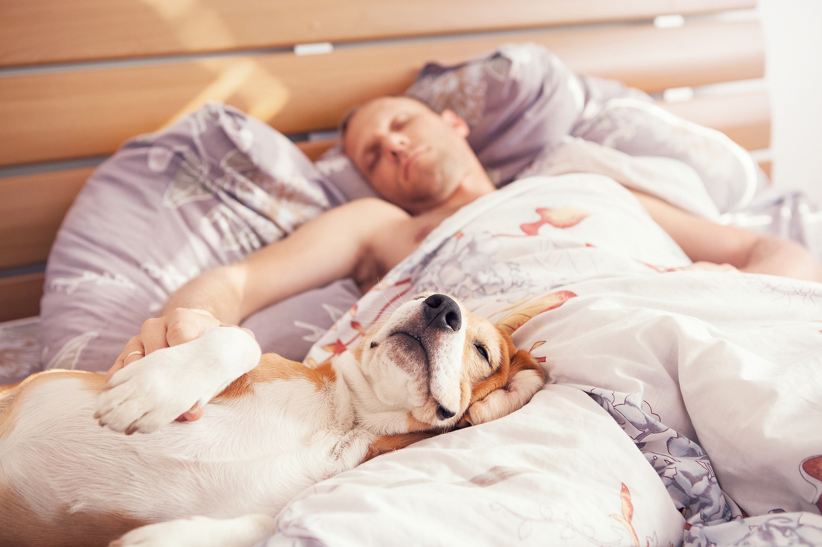 Dog lying on back in the bed while man sleeps next to him