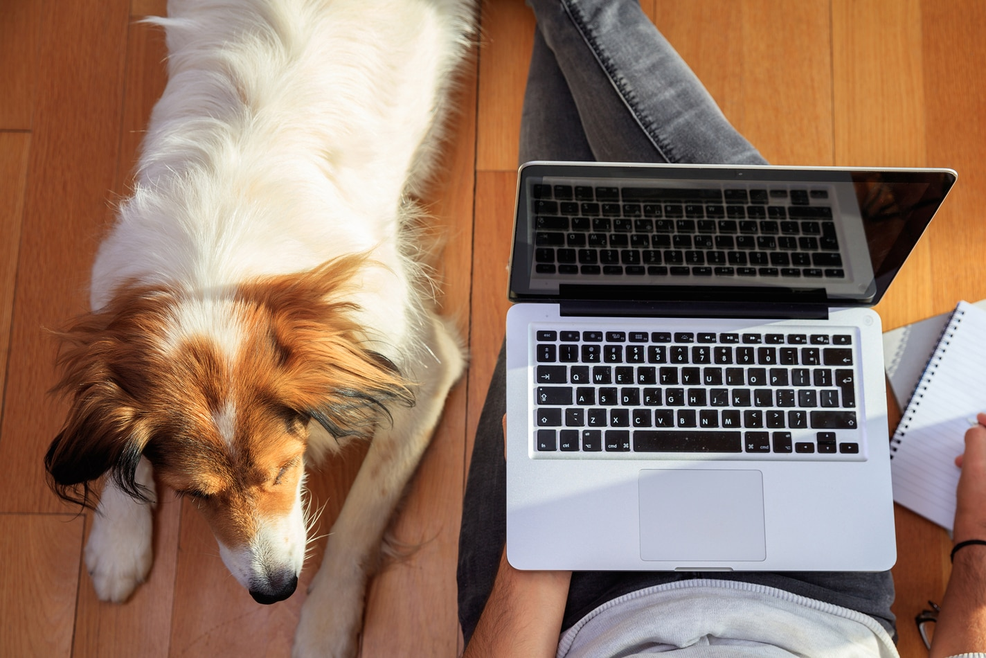 Dog laying next to a man sitting ont he ground with laptop and notepad.