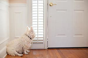 West Highland White Terrier waiting at the front door of a home