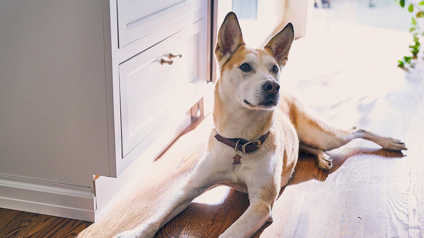 Hills Pet Nutrition Dog Cat Food Transforming Lives 35 Hp Johnson Wiring Diagram Feeding Dogs